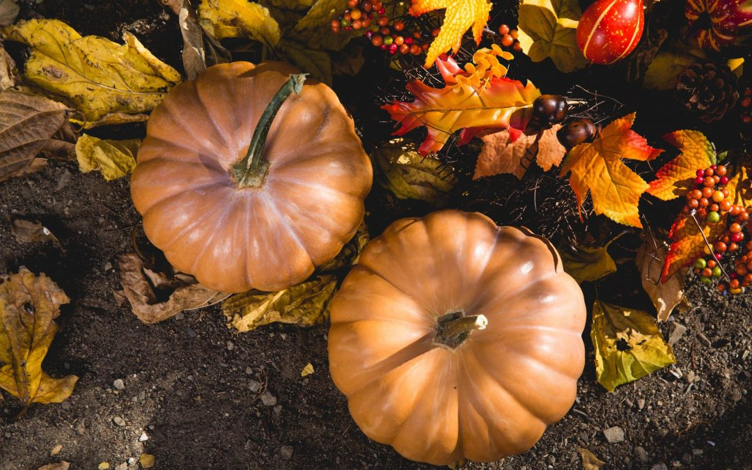 Thanksgiving: Bringing New Perspective to Challenges